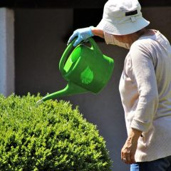 Garden Maintenance and Watering